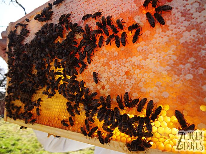 Honig selbst machen